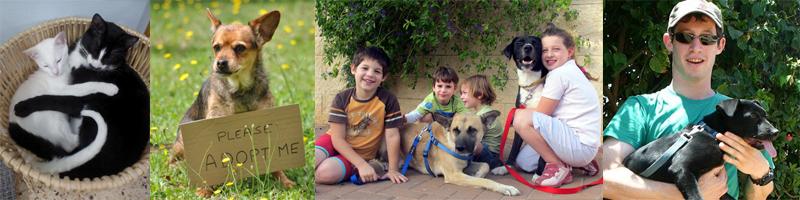 מתנדב עם כלב שחור, ילדים עם 2 כלבים יושבים על המדרכה, תמונה של כלב מבוגר ועליו שלט שאומר אימצו אותי וסלסה עם חתול לבן וחתול שחור מתחבקים