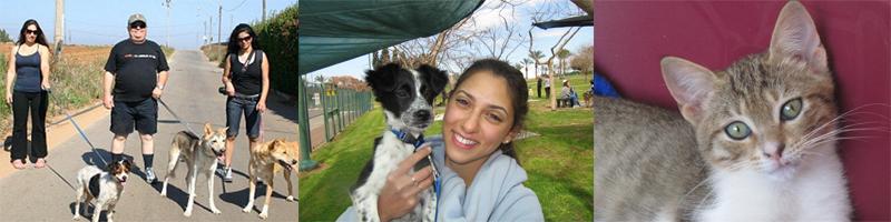 מתנדבת עם כלב שחור ולבן, חתול אפור עם רקע סגול ומתנדבים הולכים עם כלבים